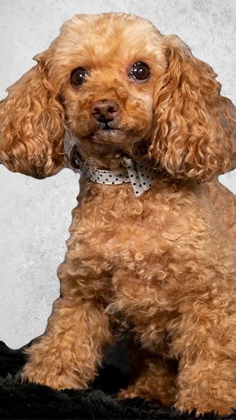 Zahnarztpraxis Beckhoff - Praxishund Peggy - Patientenbetreuung